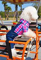 Комбинезон джинсовый с рубашкой для собаки. Одежда для собак