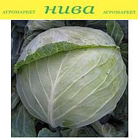 Наоми F1 семена капусты белокачанной средней Kitano Seeds 1 000 семян