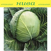 Куизор F1 семена капусты белокачанной ранней Syngenta 2 500 семян
