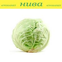Кевін F1 насіння капусти б/к ранньої Syngenta 2 500 насінин, фото 1