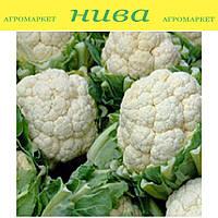 Каспер F1 (Kasper F1) семена капусты цветной поздней Rijk Zwaan 500 семян