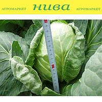 Легат F1 насіння капусти б/к ранньої Clause 2 500 насінин