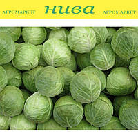 Адаптор F1 семена капусты Syngenta 1 000 семян