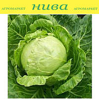 Миррор F1 семена капусты белокачанной ранней Syngenta 500 семян
