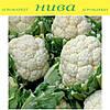 Каспер F1 (Kasper F1) семена капусты цветной поздней Rijk Zwaan 100 семян