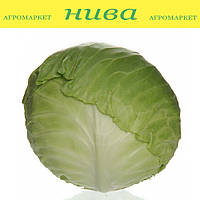 Монро F1 семена капусты белокачанной среднепоздней 110-120 дней Sakata 1 000 семян