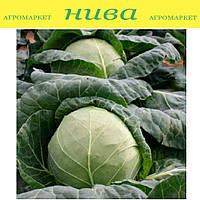 Ортус F1 семена капусты белокачанной ранней Takii Seeds 2 500 семян
