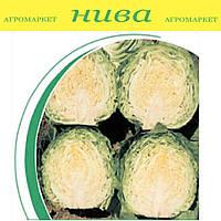 Балбро F1 насіння капусти б/к ранньої Hazera 2 500 насінин
