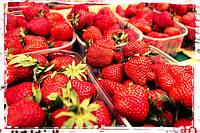 Лоток для ягоды 0,5л ПП-702, 190*114*53
