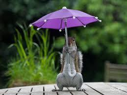 Зонт: захищаємося від дощу!