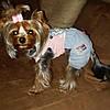 """Комбинезон, костюм джинсовый с футболкой """"Деним"""" для собаки. Одежда для собаки, фото 9"""