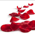 Лепестки роз, Фесты