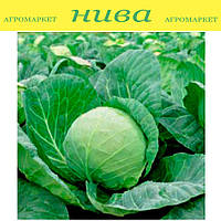Лема F1 (Lema F1) семена капусты белокачанной калибр. Rijk Zwaan 1 000 семян