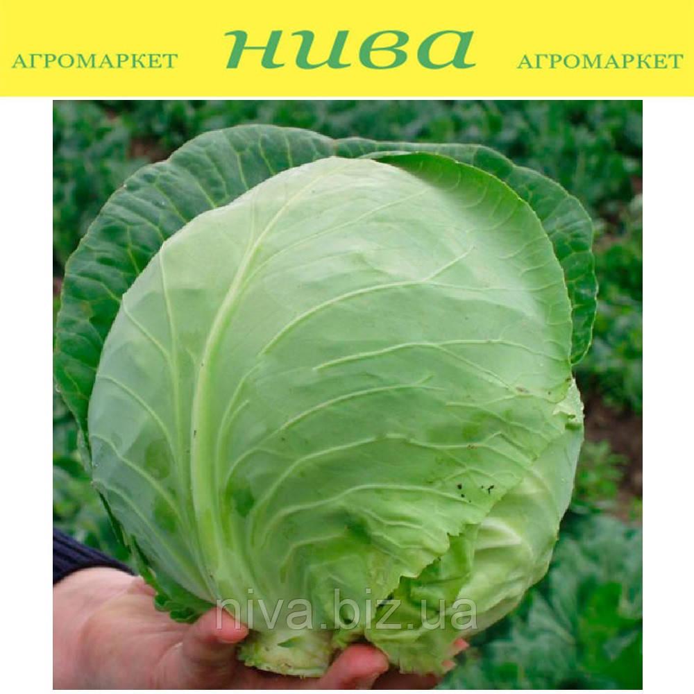 Оракл F1 насіння капусти б/к ранньої Сlаuse 1 000 насінин