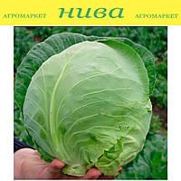 Оракл F1 семена капусты белокочанной ранней Clause 1 000 семян