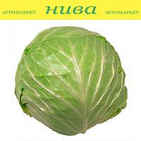 Рейма F1 (Rayma F1) семена капусты белокачанной ранней Rijk Zwaan 1 000 семян