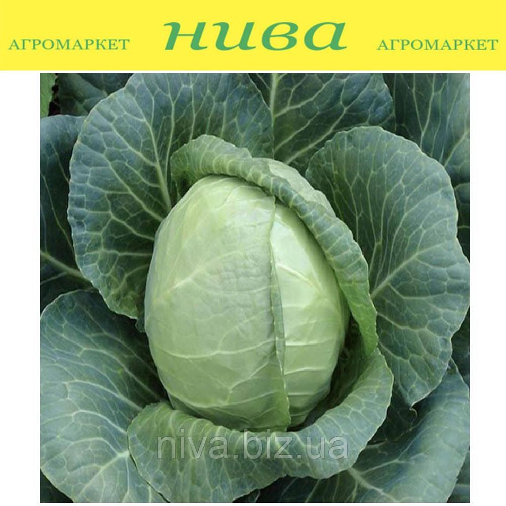 Сунта F1 насіння капусти б/к ранньої Takii Seeds 2 500 насінин