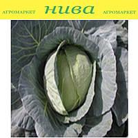 Коріно F1 насіння капусти б/к середньоранньої Semo 2 500 насінин