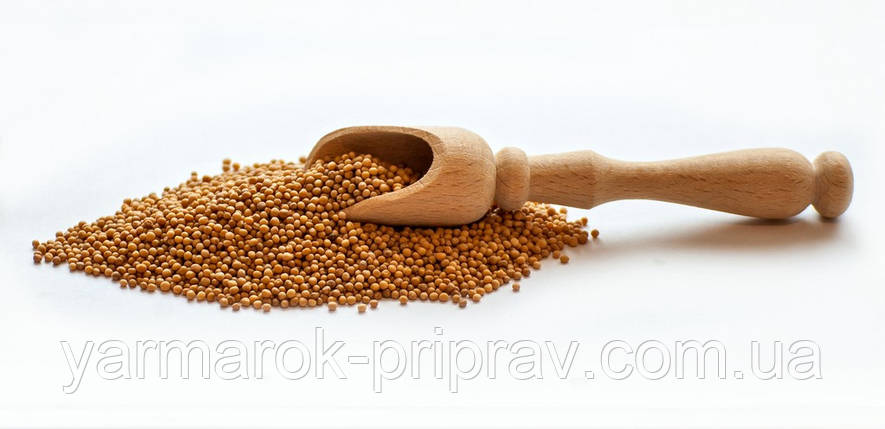 Горчица зерно, фото 2