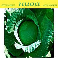 Лаура F1 (AGX-701 F1) семена капусты белокачанной ранней Agri Saaten 1 000 семян