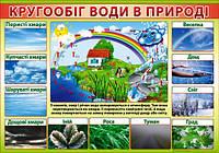 """Плакат """"Кругообіг води в природі"""" 480х676 мм."""