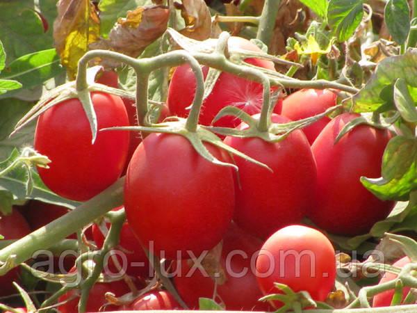 Семена томатов по низким ценам