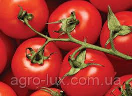 Гибридные семена томатов