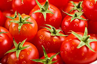 Советы дачников по посеву семян томатов