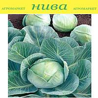 Арривист F1 (Arrivist F1) семена средней капусты Seminis 2 500 семян