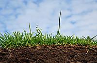 Стрижка газону, покіс трави Догляд за газоном Обслуговування газонів