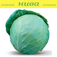 Хонка F1 насіння капусти б/к середньої Kitano Seeds 1 000 насінин