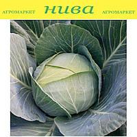 Отм Квін F1 насіння капусти б/к середньоранньої Takii Seeds 2 500 насінин