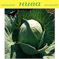 Пруктор F1 насіння капусти б/к середньої Syngenta 2 500 насінин
