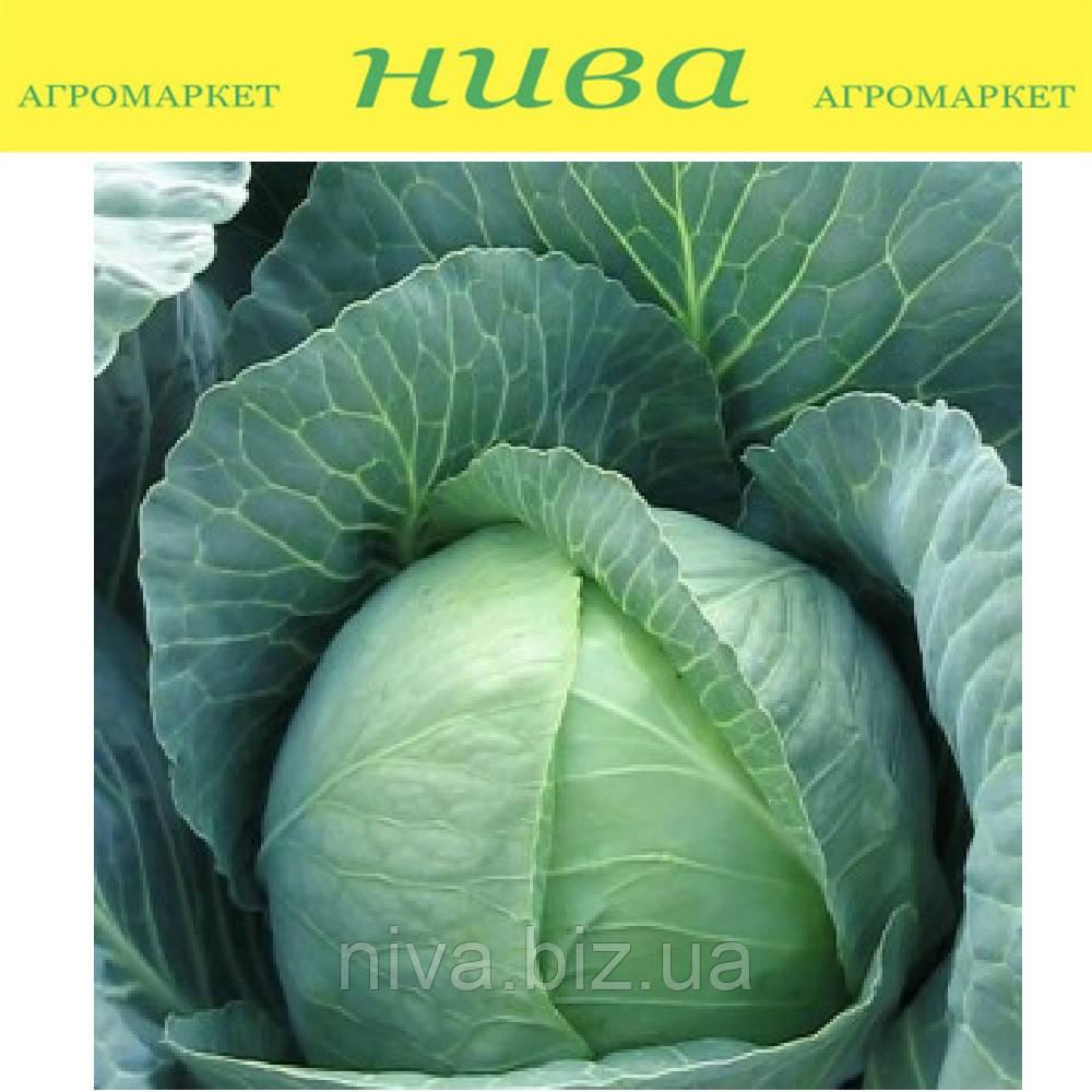 Томас F1 насіння капусти б/к середньої Bejo 2 500 насінин