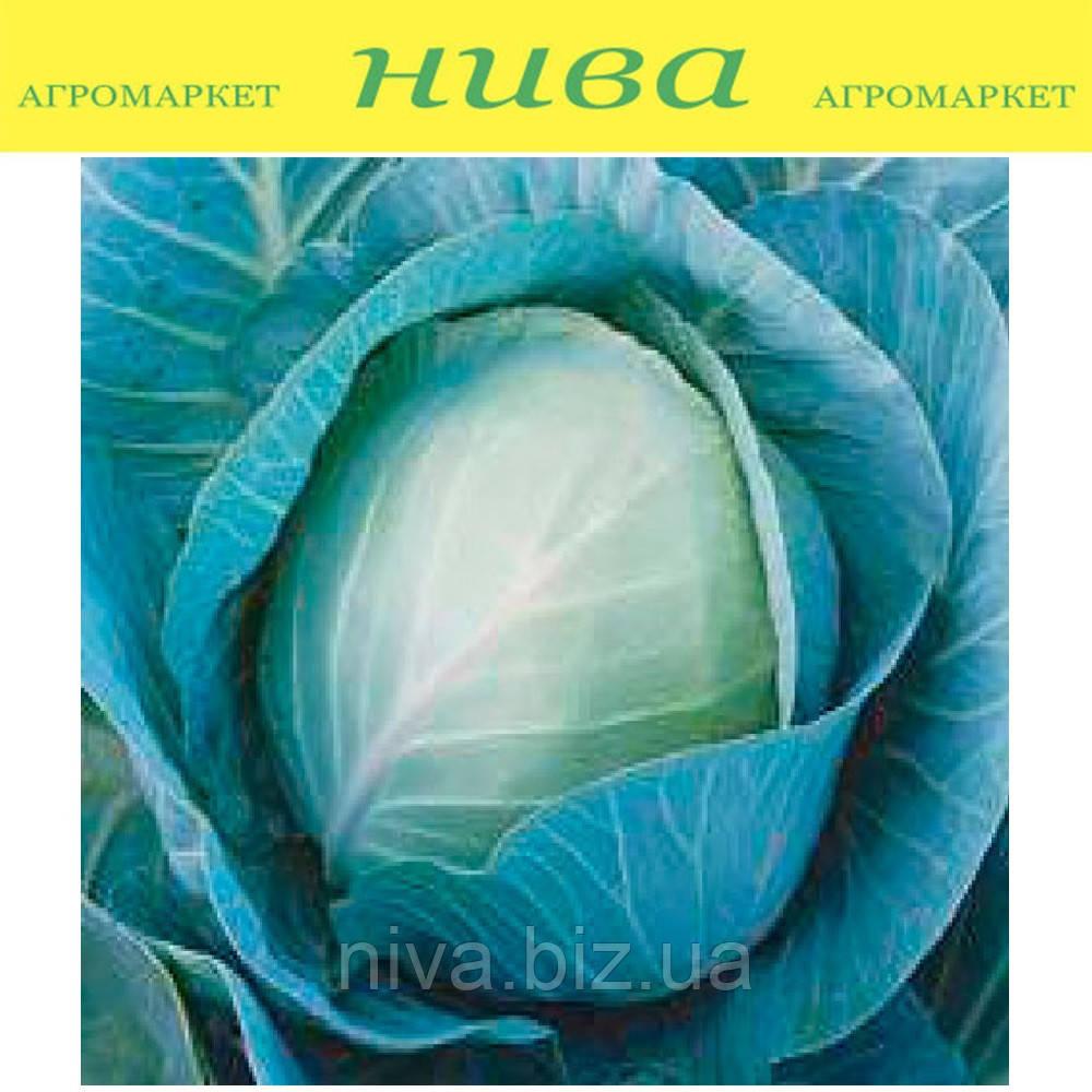 Тріперіо F1 насіння капусти б/к середньої Syngenta 2 500 насінин