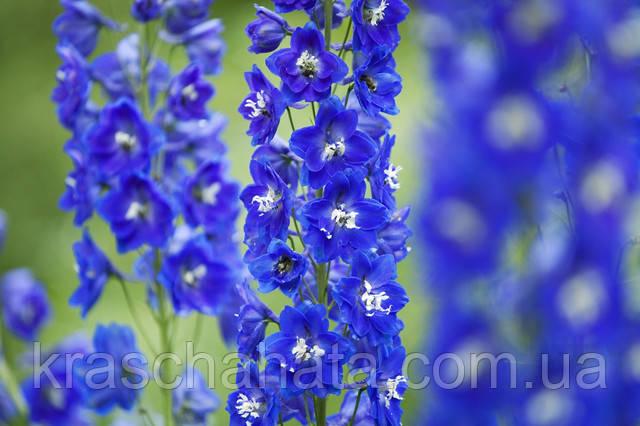 15 цветочных культур, которые нужно посеять на рассаду в апреле  Подробнее на сайте 7dach.ru: 15 цветочных культур, которые нужно посеять на рассаду в апреле / Дача — это философия моей жизни. / 7dach.ru