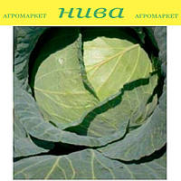 Грендслем F1 семена капусты белокачанной средне-поздняя Sakata 1 000 семян