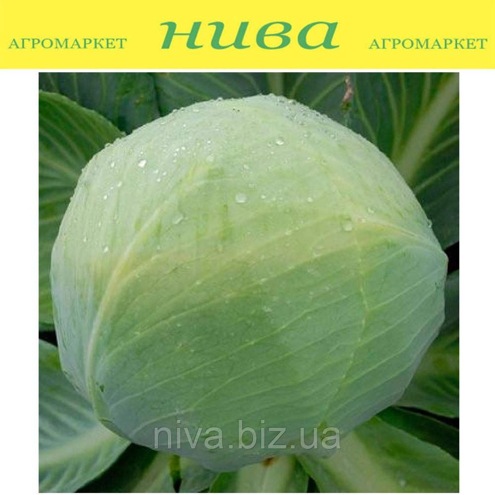 Золтан F1 семена капусты белокачанной средне-поздней калибр. Hazera 2 500 семян
