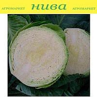 Циклоп F1 семена капусты белокачанной средней Sakata 1 000 семян