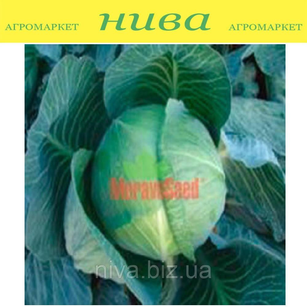 Атила F1 семена капусты белокачанной поздней Moravoseed 1 000 г