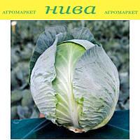 Джубили F1 (Jubilee F1) семена капусты белокачанной поздней Bejo 2 500 семян
