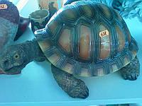 Черепаха, l-0.40