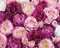 Розы, пионы, гортензии