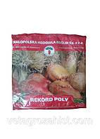 Семена кормовая свекла Рекорд 0,5 кг (розовый) Польша