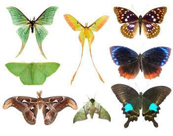 Бабочки искусственные
