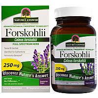 Nature's Answer, Forskohlii, 250 мг, 60 шт., вегетарианские капсулы, купить, цена, отзывы