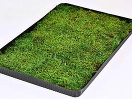 Мох стабилизированный плоский 0.2 m2  36*56cm