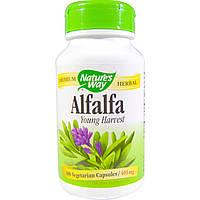 Nature's Way, Молодая люцерна, 405 мг, 100 растительных капсул, купить, цена, отзывы