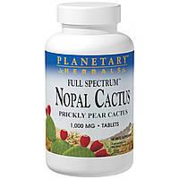 Planetary Herbals, Мексиканский нопал, кактус-опунция полного спектра, 1000 мг, 120 таблеток, купить, цена, отзывы