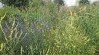 Семена  медоносных растений (медоносні рослини, насіння)